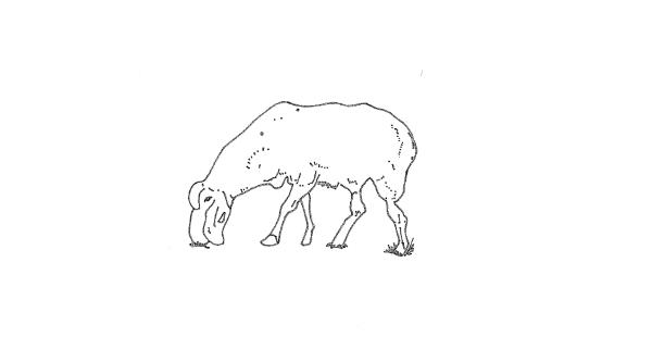 山の上の羊