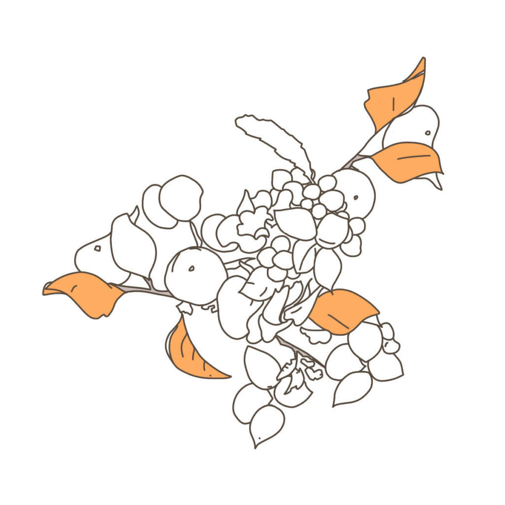 2016年に描いた植物のイラスト。ペンタブレットで配色する。外側の葉の配色。