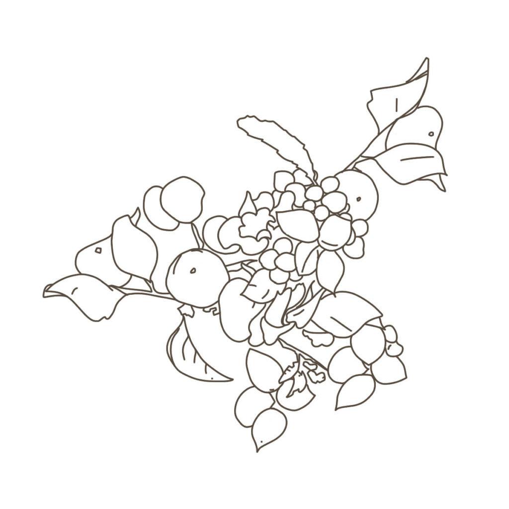 2016年に描いた植物のイラスト。ペンタブレットで線を描く。色なし